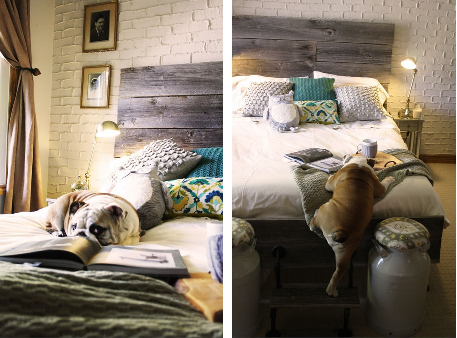 The dogs of design staged for style for Interior design dog bed